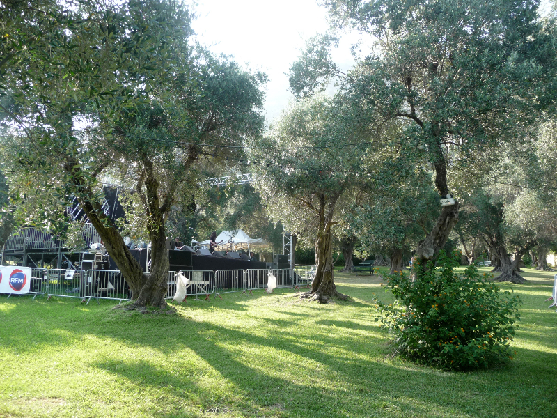 Installation de la scène entre les oliviers centenaires